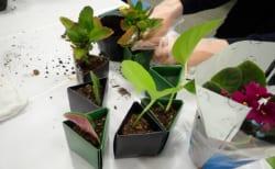 (終了しました)お部屋で大きくなった植物を長く楽しむ方法
