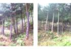 豊かな森を残そう!森林ボランティアin多賀町・高取山