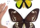 生物の不思議~大小さまざま進化展~