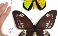 (終了しました)生物の不思議~大小さまざま進化展~