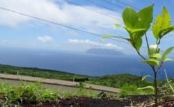 【10/1(金)~3(日)】三宅島に緑を!植林ボランティア「第231回 三宅島プログラム」