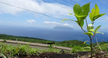 ※締め切りました※【7/2(金)~4(日)】三宅島に緑を!植林ボランティア「第229回三宅島プログラム」