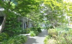 (終了しました)中央区の屋上庭園展 ~区の緑化取り組み~