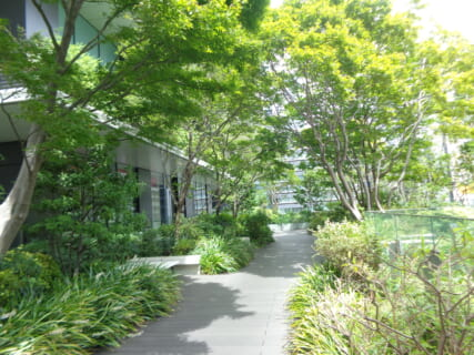中央区の屋上庭園展 ~区の緑化取り組み~